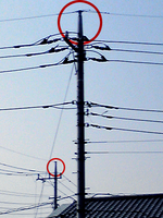 電柱の先っぽ