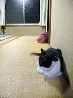猫の家は一戸建て
