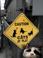 猫の遊び場