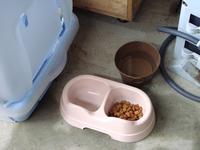 どの猫が餌食べてる?