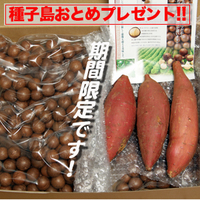ロースト殻付(3kg)+種子島おとめプレゼント