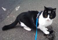 不幸を呼ぶ黒猫